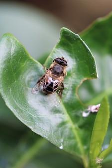Vertical de uma mosca em uma planta em um campo sob a luz do sol com uma parede desfocada