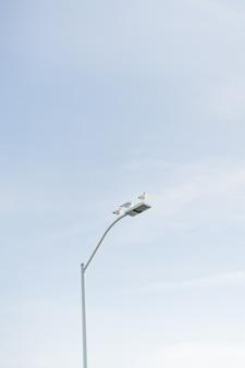 Vertical dos pombos, sentado em um poste de luz branco com o céu