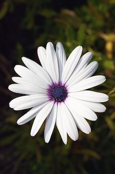 Vertical uma flor de pétalas brancas em uma parede borrada