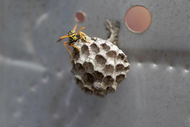 Vespa e sua casa em uma pequena casa de vespa
