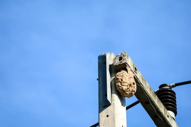 Vespas ninho no topo do poste elétrico para evitar a interferência de outros animais