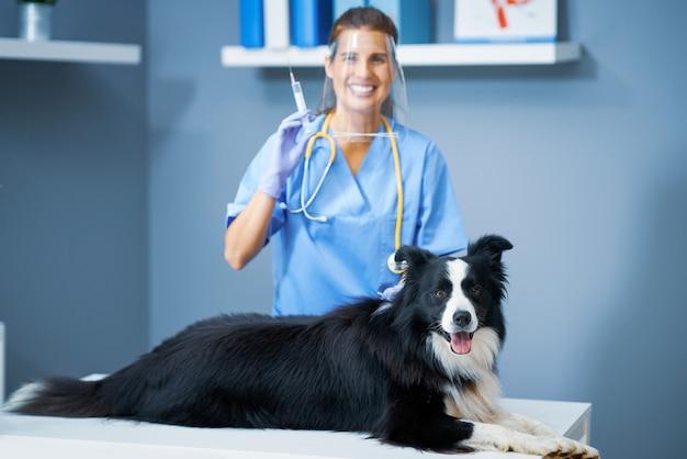 Veterinária examinando um cachorro na clínica