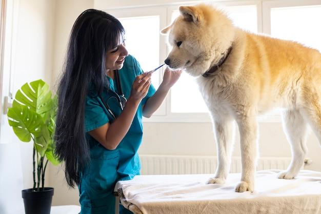 Veterinária latina dando guloseima para um cachorro sentado