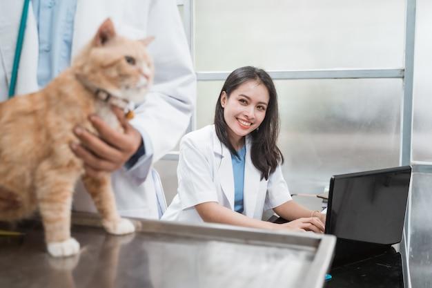 Veterinária sorridente ao digitar usando um laptop atrás de um veterinário examinando gatos na clínica veterinária