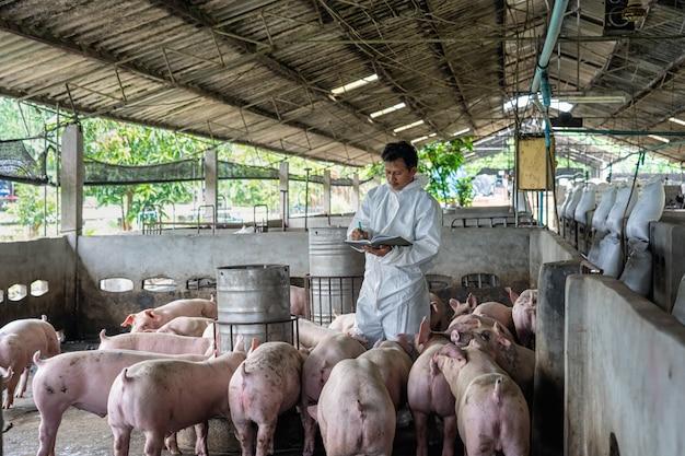 Veterinário asiático trabalhando e verificando o porco em fazendas de suínos, animais e suínos indústria de fazenda