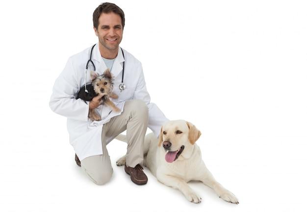 Veterinário bonito posando com yorkshire terrier e labrador amarelo sobre fundo branco