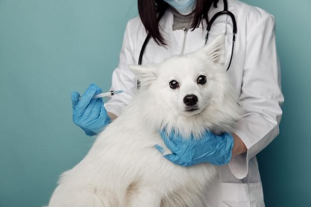Veterinário com cachorro branco de bochechas de estetoscópio na mesa na clínica veterinária. cuidar do conceito de animais de estimação.