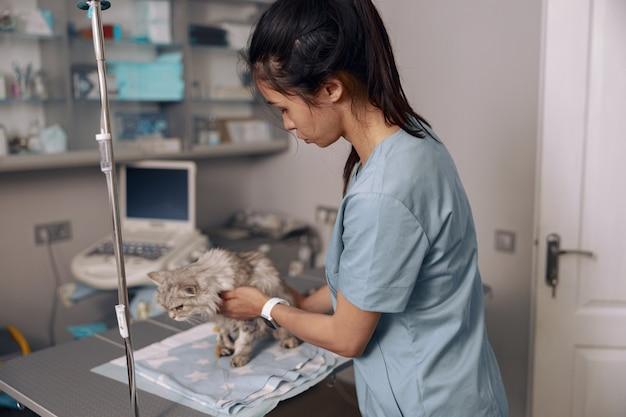 Veterinário cuidadoso de uniforme acalma gato fofo cinza com infusão intravenosa na clínica