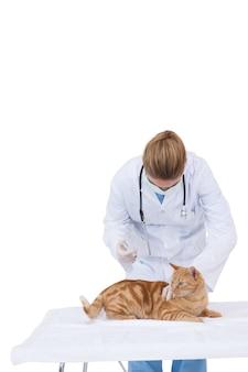 Veterinário dando a um gato um cheque