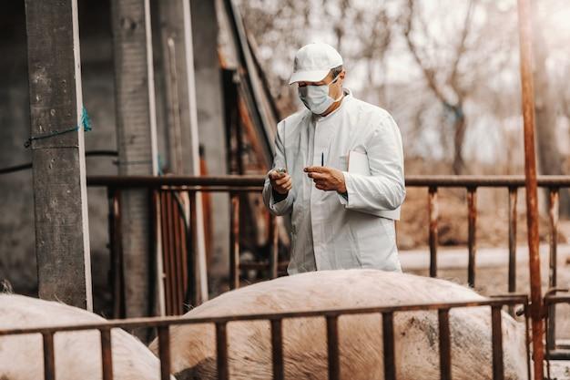 Veterinário de jaleco branco e máscara no rosto, mantendo a área de transferência sob a axila e preparando-se para dar injeção ao porco em pé na costa.