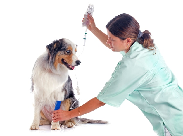 Veterinário e cachorro