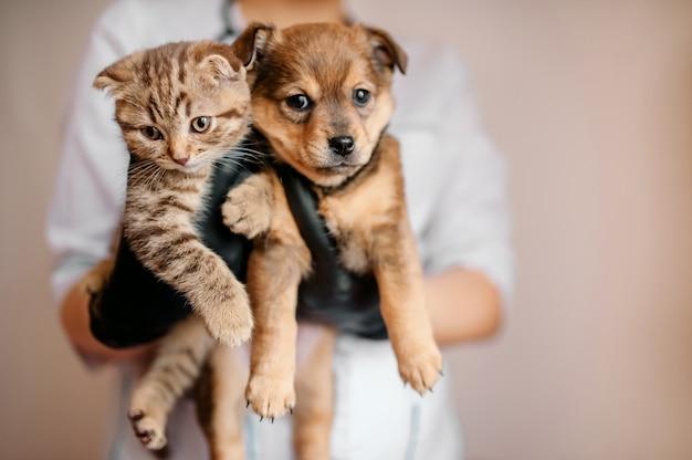 Veterinário em luvas pretas com um cachorro e um gato nas mãos