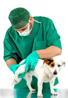 Veterinário examina o quadril do cachorro
