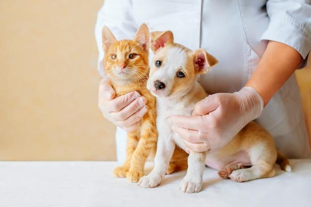 Veterinário examinando cachorro e gato