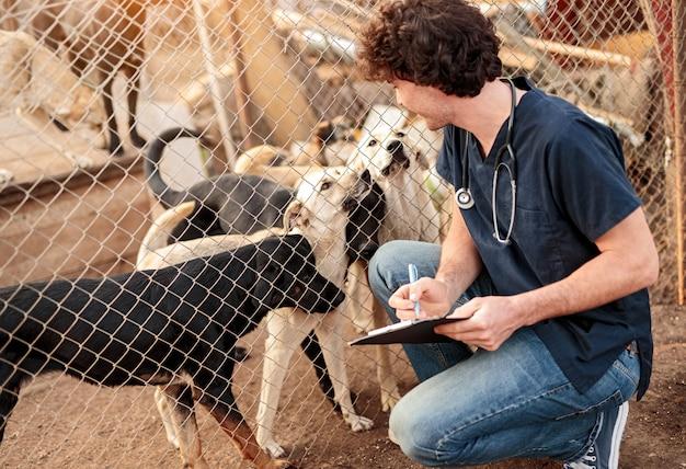 Veterinário examinando cães em abrigo