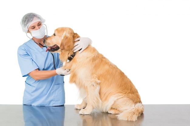 Veterinário examinando um cachorro