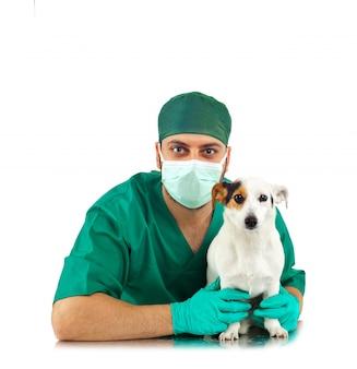 Veterinário examinando um jack russell