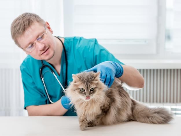 Veterinário fazendo check-up regular de um gato no consultório veterinário