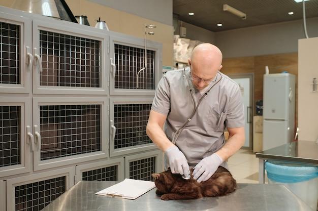 Veterinário maduro de uniforme examinando e ouvindo gato com estetoscópio na clínica