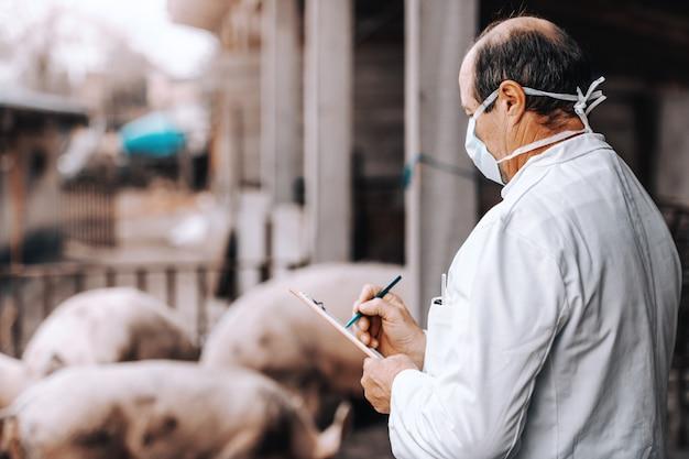 Veterinário maduro no jaleco branco que guarda a prancheta e que verifica a saúde dos porcos ao estar na costa. exterior do país.
