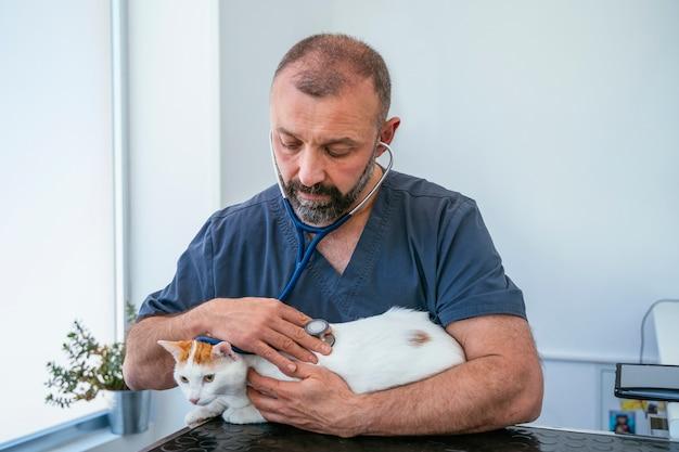 Veterinário masculino interessado que verifica batimentos cardíacos com estetoscópio a um gato idoso insalubre