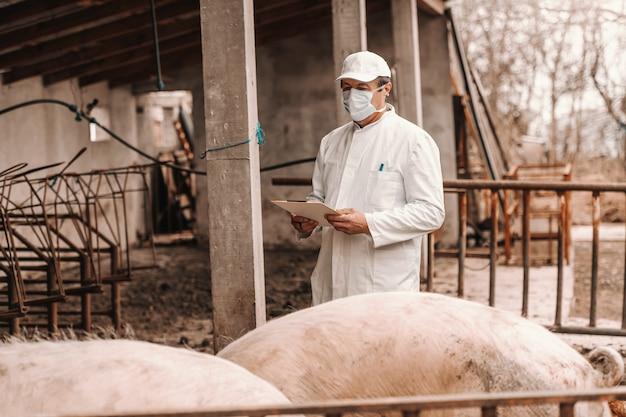 Veterinário no jaleco branco, chapéu e com máscara protetora no rosto, segurando a área de transferência e verificação de porcos em pé na costa.