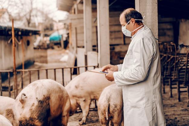 Veterinário no jaleco branco e com máscara protetora no rosto, escrevendo nos resultados da área de transferência do exame de porcos em pé na costa.
