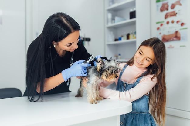 Veterinário profissional verificar um cão de raça yorkshire terrier usando um otoscópio em um hospital de animais de estimação