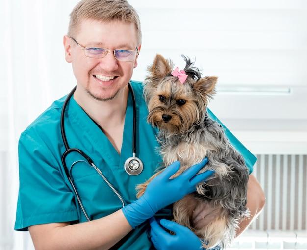 Veterinário segurando o cachorro yorkshire terrier nas mãos