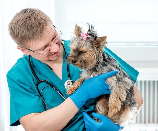 Veterinário segurando o cão nas mãos na clínica veterinária