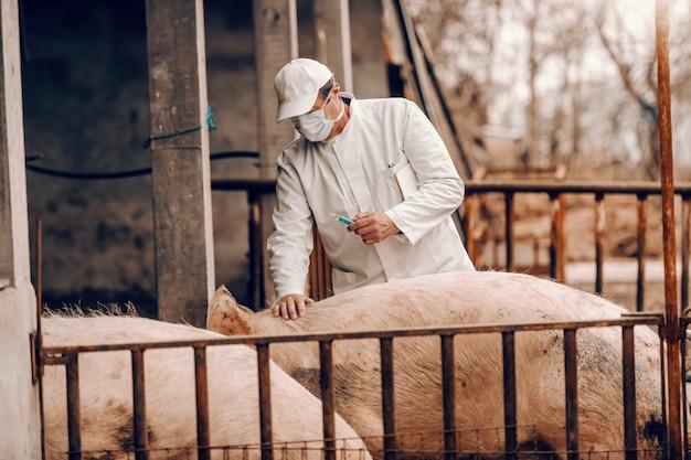 Veterinário sênior no jaleco branco, chapéu e com máscara protetora no rosto, segurando a área de transferência sob a axila e preparando-se para dar injeção a um porco em pé em uma cote.