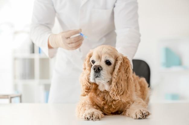 Veterinário vacinando cachorro fofo na clínica