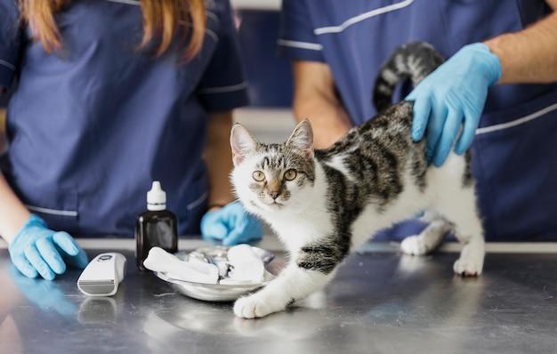 Veterinários em close-up com medicamento para gato ferido