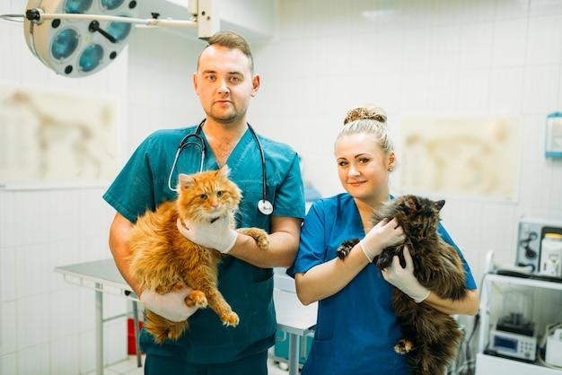 Veterinários profissionais posam com gatos, clínica veterinária. médicos veterinários com pacientes fofos, tratando um cachorro doente