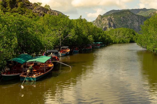 Viagem de floresta de mangue