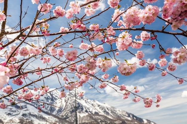 Viagem de primavera em sochi