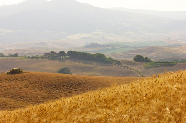 Viagem de verão às vinhas e ciprestes. vista das colinas verdes e amarelas na toscana, na itália.