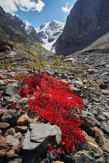 Viagem pelas montanhas de altai até aktru