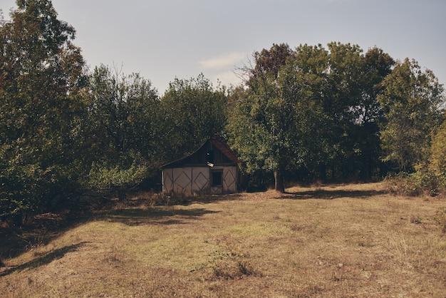 Viagem pelo campo em uma vila de verão na árvore verde