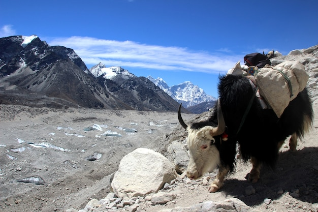 Viajando para o nepal
