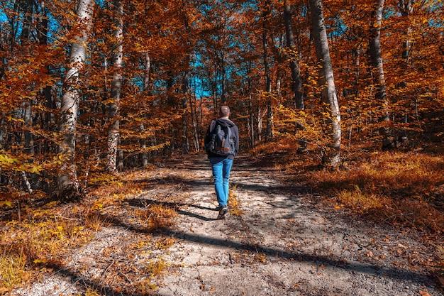 Viajante com mochila e câmera caminha por um caminho na floresta