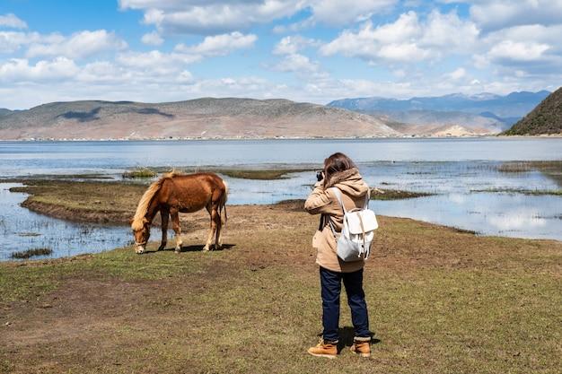 Viajante jovem, mulher, fazendo exame um retrato, de, cavalo, em, napa, lago, grassland, em, shangri-la, yunnan