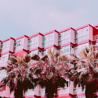 Vibrações rosa tropicais. localização urbana tropical. viagens. ilhas canárias