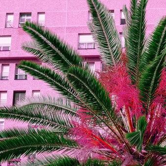Vibrações rosa tropicais. localização urbana tropical
