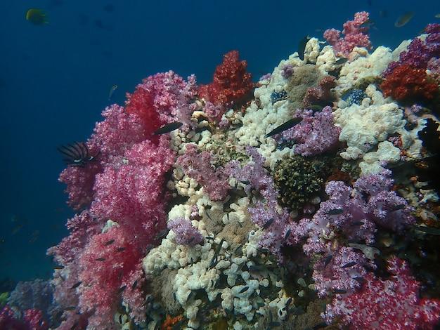 Vida marinha sob a água do mar