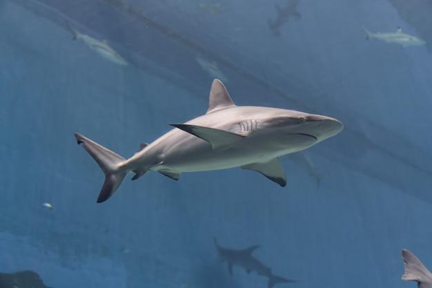 Vida marinha, tubarão nadando na água com um ambiente subaquático