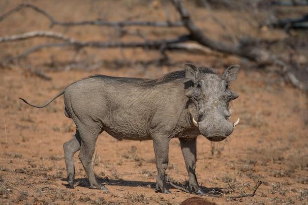 Vida selvagem africana
