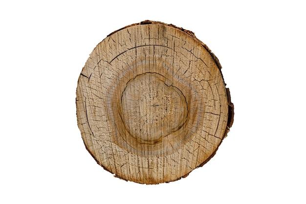 Vidoeiro de tronco em seção transversal isolada em um fundo branco. foto de alta qualidade