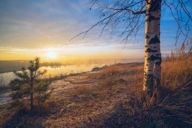 Vidoeiro e pinheiros no por do sol pelo lago.