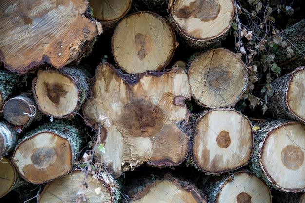 Vidoeiros florestais, pinheiros e abetos vermelhos. pilhas de toras, extração da indústria madeireira. close-up - madeira fresca cortada. processamento de florestas derrubadas, troncos de madeira serrada. foto abstrata do fundo de madeira